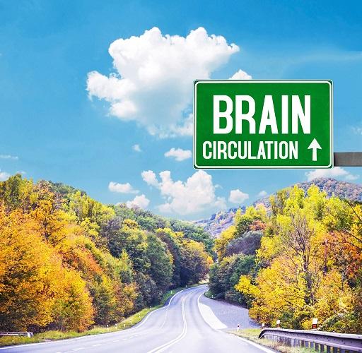 More brain circulation less brain drain